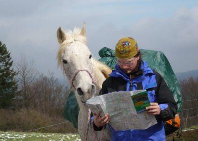 Das_Pferd_weiss_schon_wo_es_hingeht